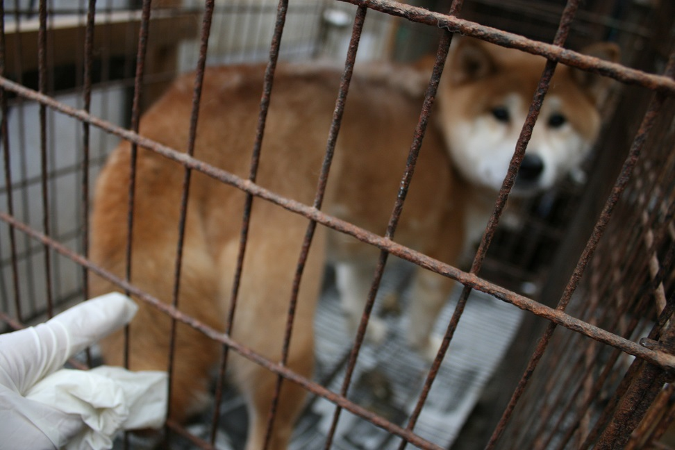 放棄された小型犬たち(2/20)_f0242002_168272.jpg