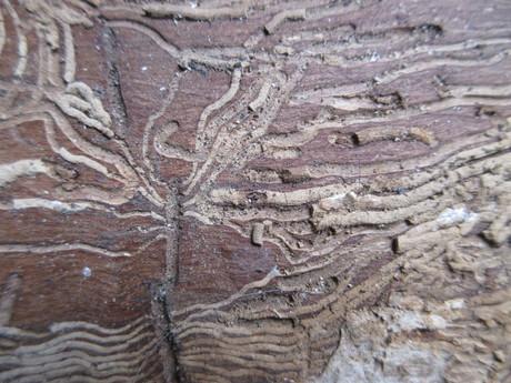ナスカの地上絵みたいに(薪の木肌)_a0203003_1142488.jpg