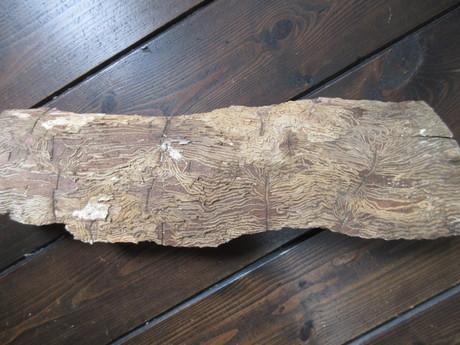 ナスカの地上絵みたいに(薪の木肌)_a0203003_1143860.jpg