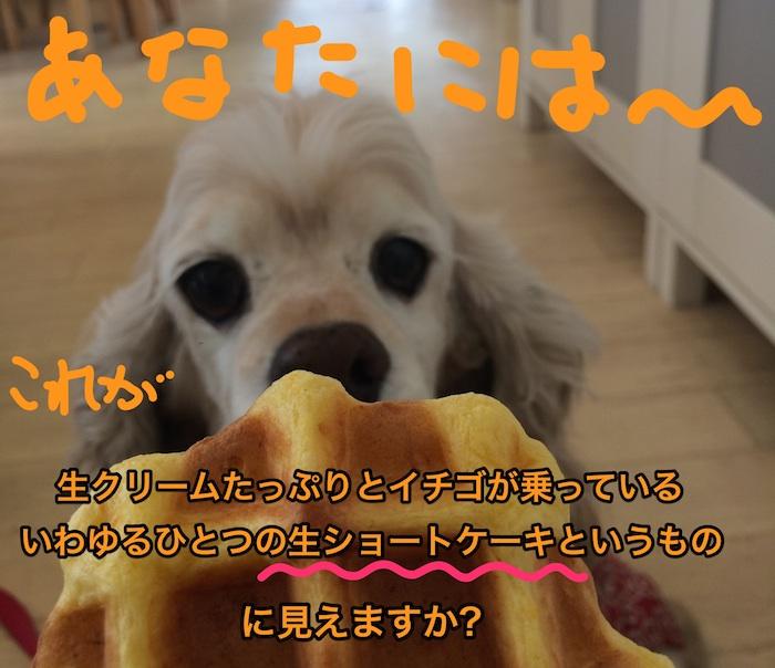 b0067012_207061.jpg