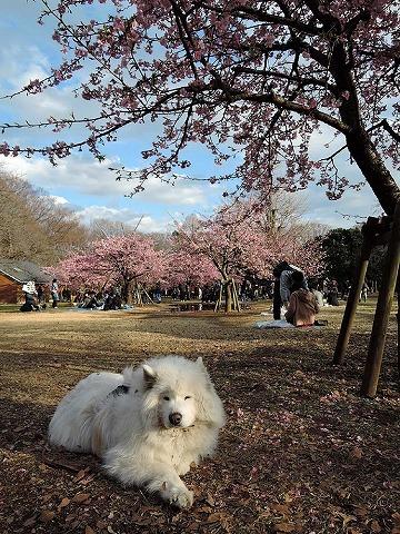 日曜おっきな公園_c0062832_07571026.jpg