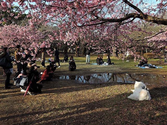 日曜おっきな公園_c0062832_07571074.jpg