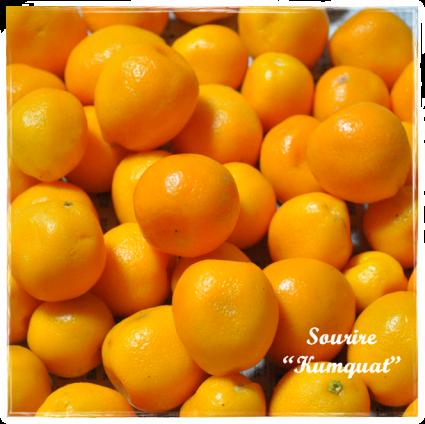 Kumquat ~金柑~_c0350941_22283598.png