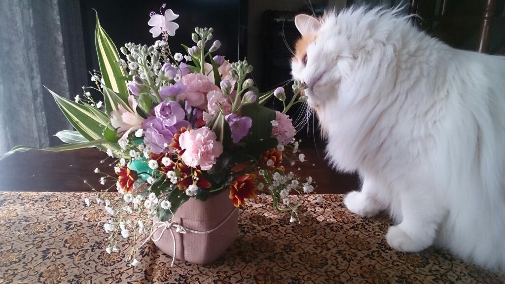 今月のフローラは生花_d0116059_12004499.jpg