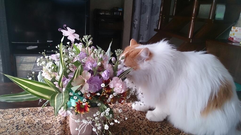 今月のフローラは生花_d0116059_12004741.jpg