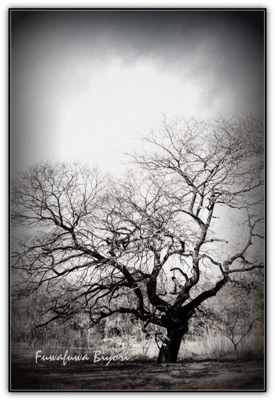 大木と椿_d0344864_12251845.jpg
