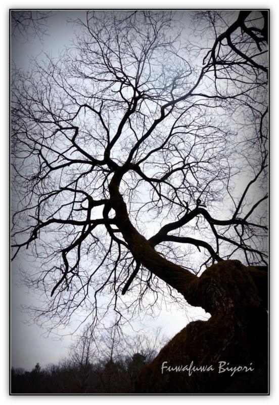 大木と椿_d0344864_12253147.jpg