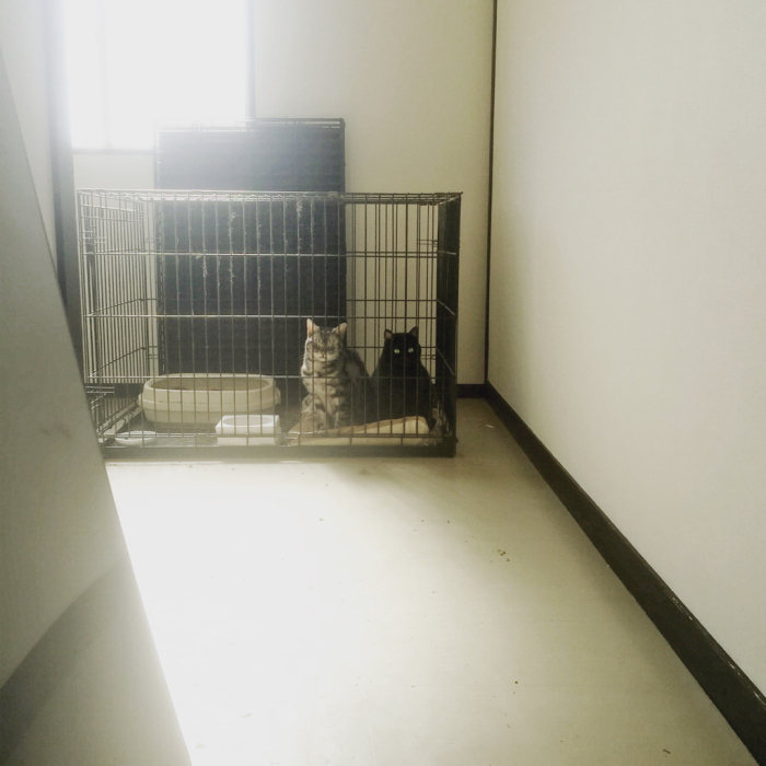 猫たちも空を飛んできました。_a0145469_12162406.jpg