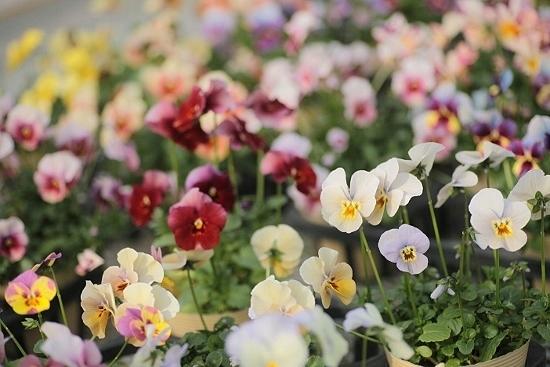美しい宮崎、そして美しい宮崎の花たち・・・・・_b0137969_07210332.jpeg