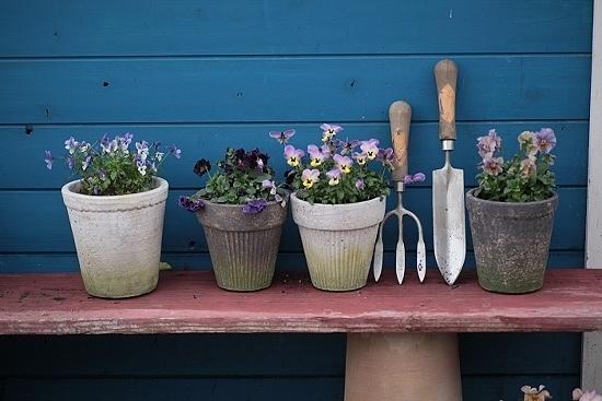 美しい宮崎、そして美しい宮崎の花たち・・・・・_b0137969_07235047.jpeg