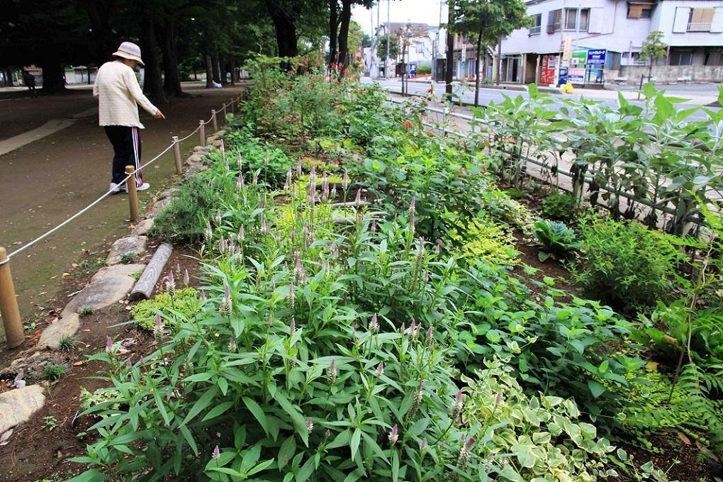 一年を振り返ると ~福岡中央公園を愛し育てる会~_a0107574_20030914.jpg