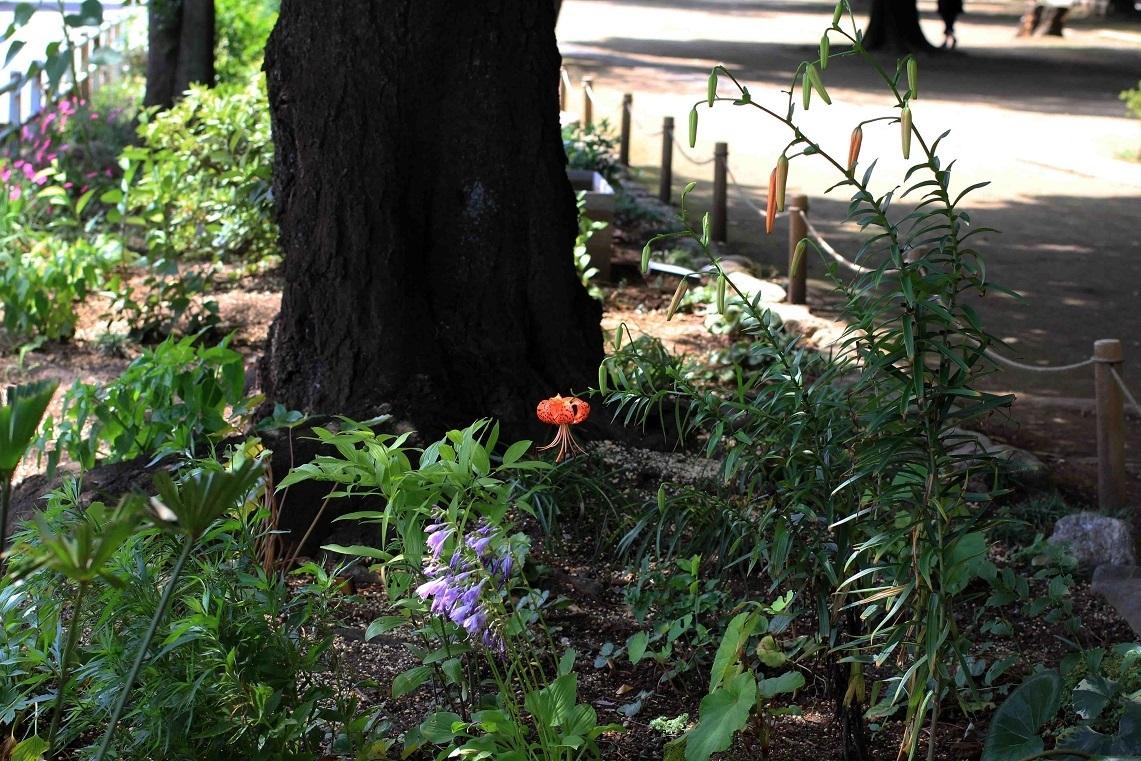 一年を振り返ると ~福岡中央公園を愛し育てる会~_a0107574_20034907.jpg