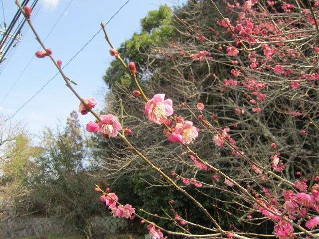 小さい春、み~つけた!_f0200477_23162028.jpg