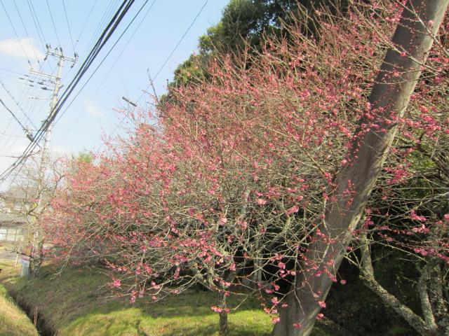 小さい春、み~つけた!_f0200477_2316411.jpg
