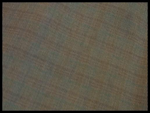 b0155085_1832284.jpg