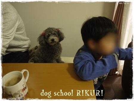 ホテル ~ ミミちゃん ~_a0284100_1555996.jpg