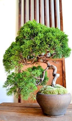 盆栽作りのワークショップ_d0263815_1711569.jpg