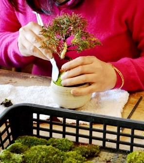 盆栽作りのワークショップ_d0263815_1724979.jpg