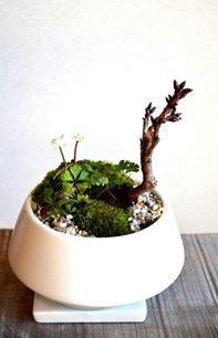 盆栽作りのワークショップ_d0263815_17254642.jpg
