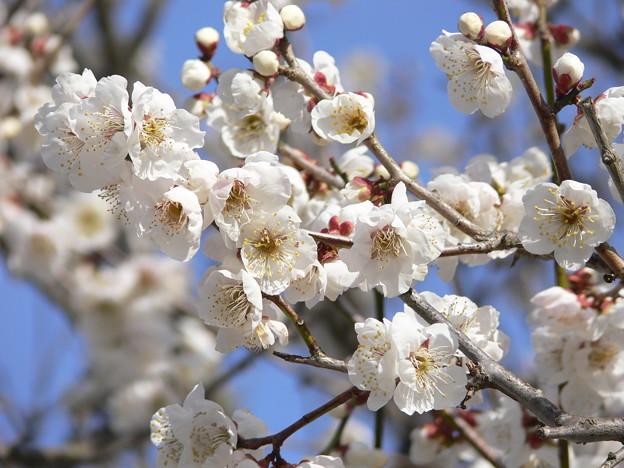 一足お先に『春』がやってきました。_e0190216_17265223.jpg