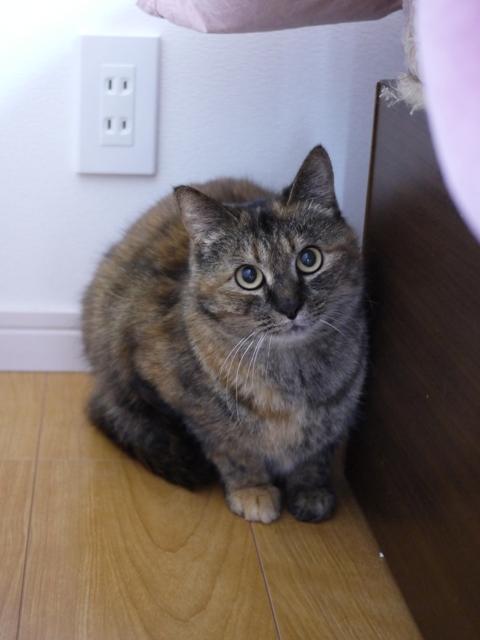 猫のお留守番 アメちゃんソラくん編。_a0143140_2214117.jpg