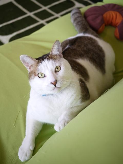 猫のお留守番 アメちゃんソラくん編。_a0143140_22143153.jpg