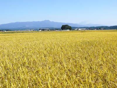 七城米 長尾農園 平成28年度のお米作りがスタートです!まずは満遍なく堆肥をまきます!!_a0254656_17145871.jpg