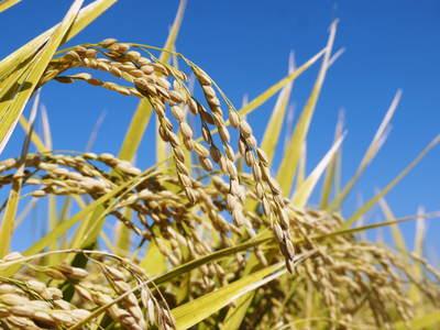 七城米 長尾農園 平成28年度のお米作りがスタートです!まずは満遍なく堆肥をまきます!!_a0254656_17153887.jpg
