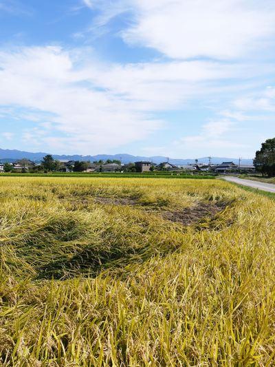 七城米 長尾農園 平成28年度のお米作りがスタートです!まずは満遍なく堆肥をまきます!!_a0254656_17523342.jpg