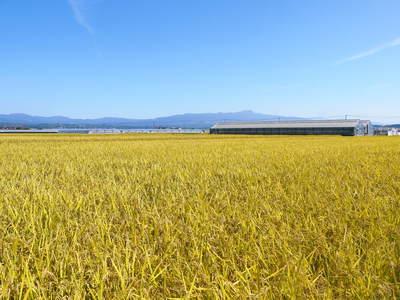 七城米 長尾農園 平成28年度のお米作りがスタートです!まずは満遍なく堆肥をまきます!!_a0254656_17581743.jpg