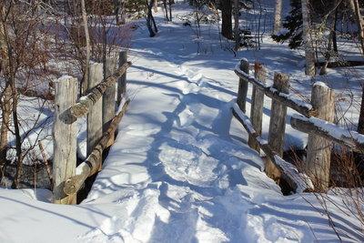 冬のお化けの森_c0353373_21594207.jpg