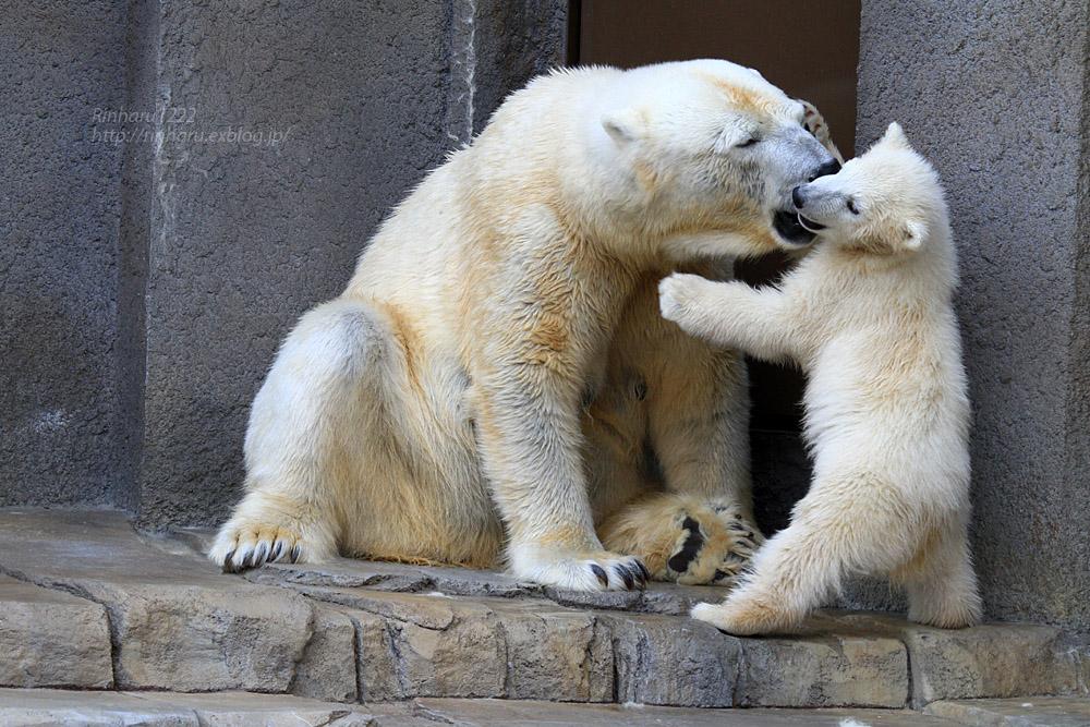 2015.4.30 円山動物園☆ホッキョクグマのララとリラ<その7>【Polar bear】_f0250322_20323237.jpg