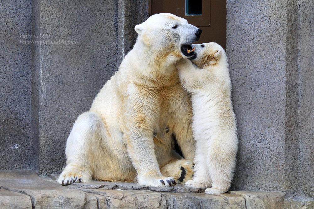 2015.4.30 円山動物園☆ホッキョクグマのララとリラ<その7>【Polar bear】_f0250322_20324568.jpg