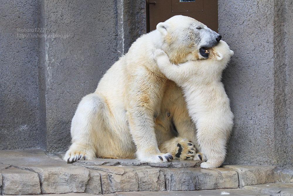 2015.4.30 円山動物園☆ホッキョクグマのララとリラ<その7>【Polar bear】_f0250322_20324891.jpg