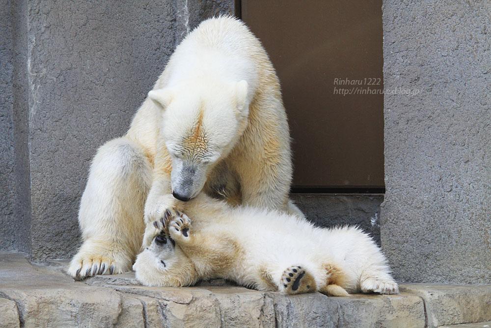 2015.4.30 円山動物園☆ホッキョクグマのララとリラ<その7>【Polar bear】_f0250322_2033468.jpg