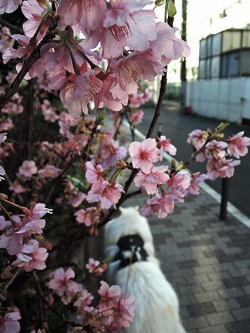 春の足音_c0062832_12123016.jpg