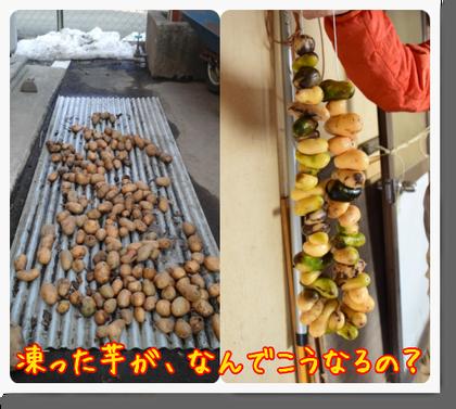 野田村でアンデス地方の食との繋がりを感じたのだ♪_c0259934_10283444.png