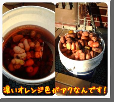 野田村でアンデス地方の食との繋がりを感じたのだ♪_c0259934_10293459.png