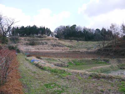 無農薬フレッシュブルーベリー 大量の木片チップを投入して腐木土で育てます_a0254656_18132018.jpg