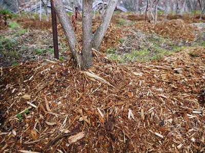 無農薬フレッシュブルーベリー 大量の木片チップを投入して腐木土で育てます_a0254656_18154828.jpg