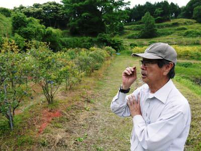 無農薬フレッシュブルーベリー 大量の木片チップを投入して腐木土で育てます_a0254656_18224629.jpg