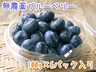 無農薬フレッシュブルーベリー 大量の木片チップを投入して腐木土で育てます_a0254656_185532.jpg