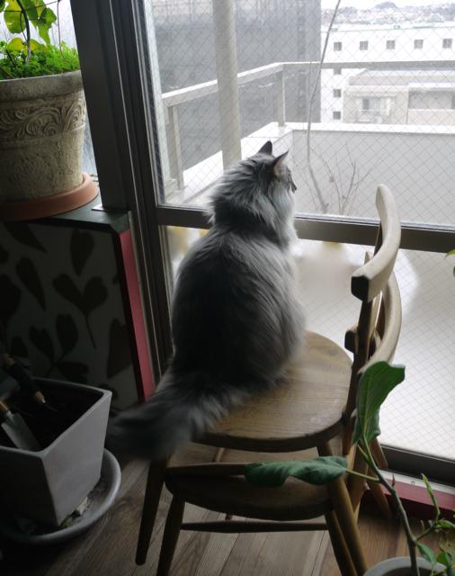 猫草とウーラチャンと鳥の声。_e0356356_15263259.jpg