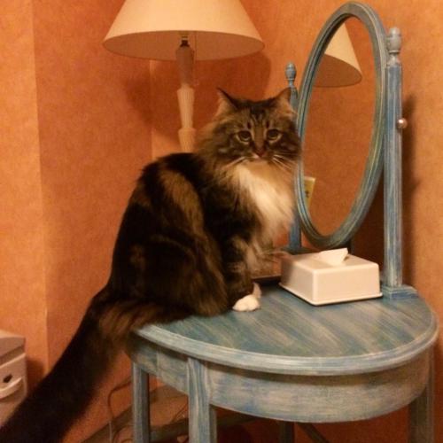 猫の日!2月22日_c0151965_00272663.jpg