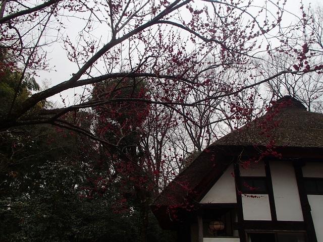藍のバッグを持って (武相荘へ)_d0105967_19525472.jpg
