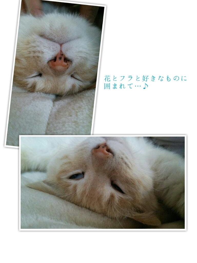 b0345108_20121885.jpg