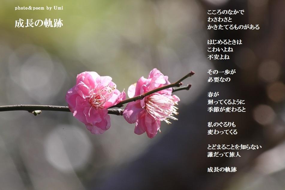 f0351844_22242166.jpg