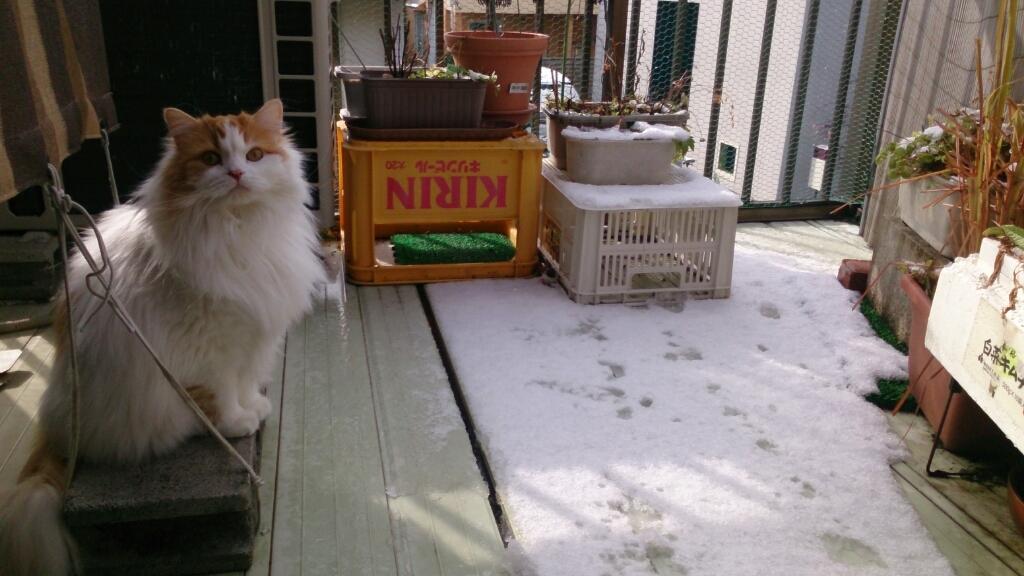 え~っ又、雪!_d0116059_18561084.jpg