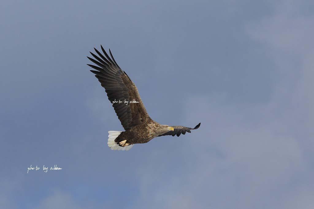 オホーツク海から見る斜里岳あんどウナベツ岳_a0039860_18394319.jpg