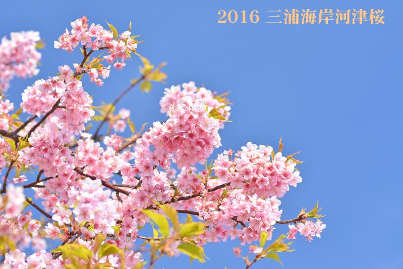 d0251161_16474104.jpg